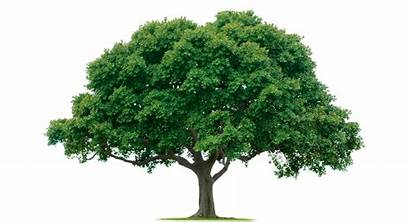 Trees Binary Applications Short Ever Its Computer
