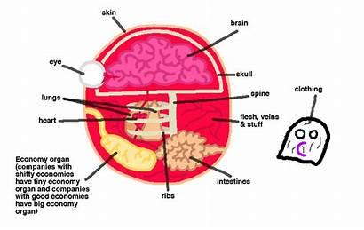Anatomy Polandball Wikia Company Fandom Pixels