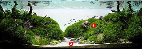 Aquascape Design Layout by Aquascaping For Beginners Aquascape Addiction