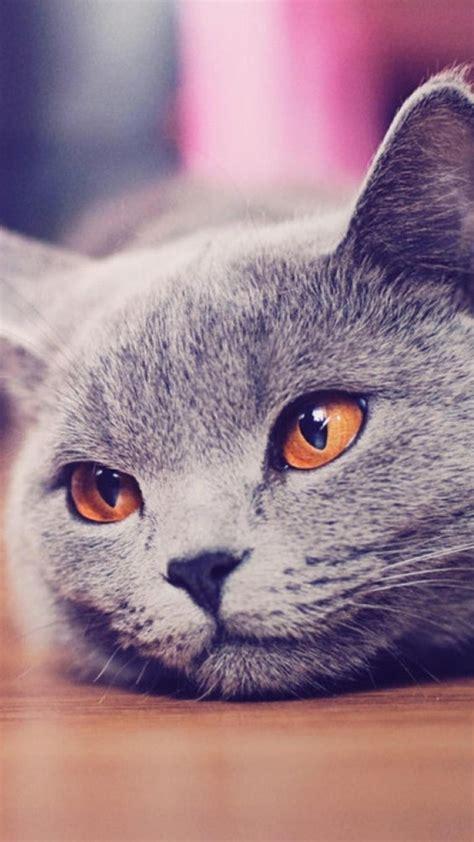 cat iphone wallpapers pixelstalknet