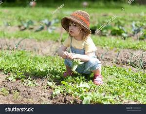 Child Cowering Vegetable Patch Stock Photo 104596547 ...