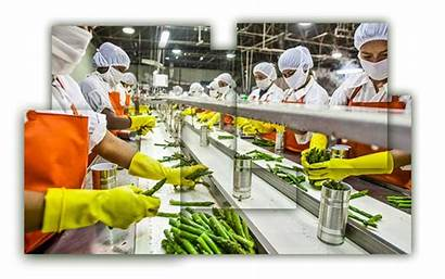 Processing India Industries Sector Fdi Finance