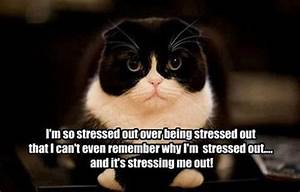 Stressed Out Meme | im-so-stressed-out-over-being-stressed ...