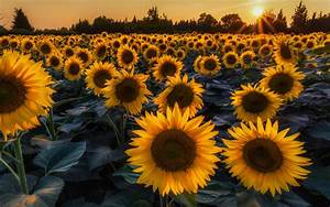 Scenery Wallpaperandphoto Com Summer Flowers Hd 169 1610 ...