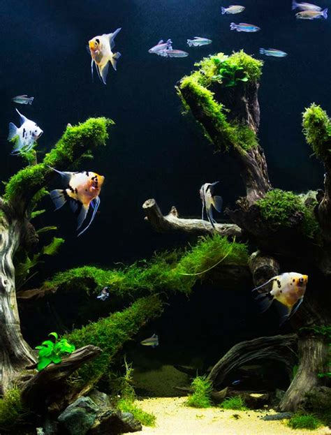 saltwater aquarium  freshwater tank pros cons