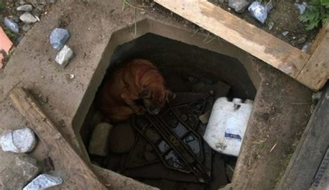 girl finds  boxer left  die   concrete grave
