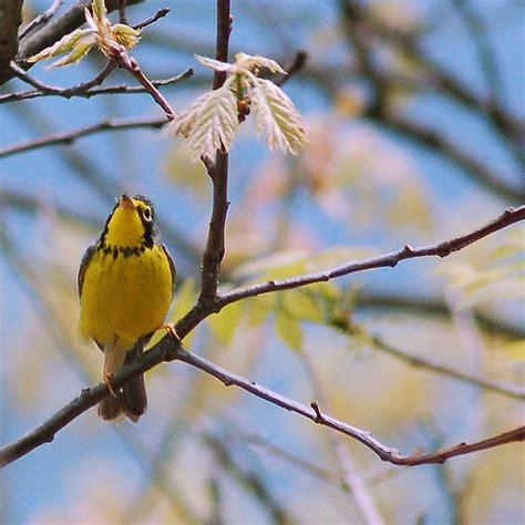the future of birds a city provides habitat for birds
