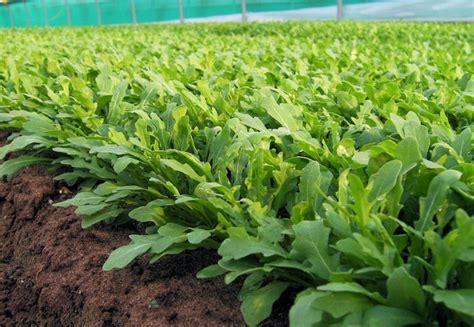 quoi planter en septembre que planter en septembre 15 id 233 es 224 semer et 50 photos pour se r 233 galer