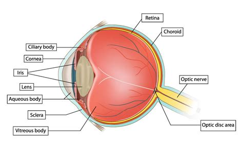 Eye Diagram To Label Kifd by Like To A More About Your And The Words
