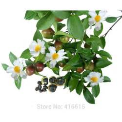 flower delivery express online buy wholesale camellia sinensis seeds from china