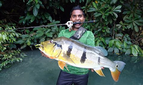 Anglers Catch Big Fish In Singapore Waters, Lifestyle News
