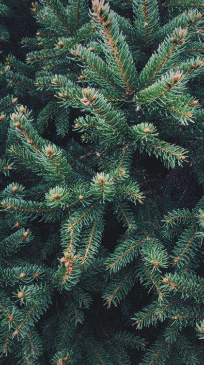 Christmas wallpaper tumblr earlhamstudentgovernment org. december christmas wallpaper | Tumblr