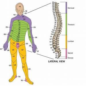 Spinal Cord Injury C3  4  C4  5  C5  6 T12 L3  L4  L5  S1