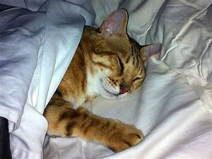 Bengals Under Bed Sheets Photos