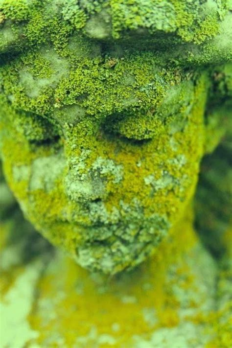Images Of Moss How To Grow Your Own Moss Gardens Beautiful And