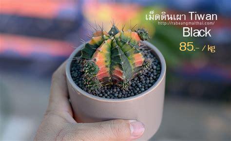 จำหน่าย เม็ดดินเผา Tiwan ( ไต้หวัน ) ใช้โรยหน้ากระถางแค ...