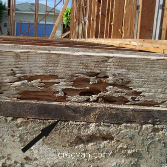 Redwood Window Sill by No Termite Damage To Redwood Sill Framing Floor Joist