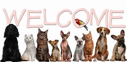 Pets Welcome Pet Animal Mind Vet Soul