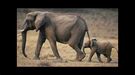This is a list of the mammal species recorded in south africa. African Animals List with Facts A to Z Learn about animals from Africa - YouTube
