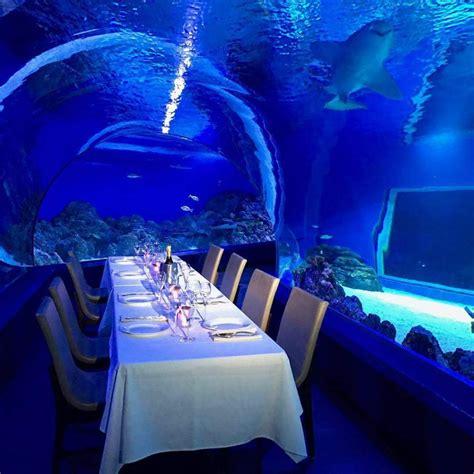 cairns aquarium business  cairns