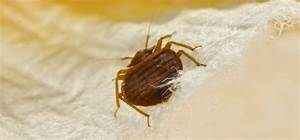 5 ways to check for bed bugs in a hotel room With bed bugs water