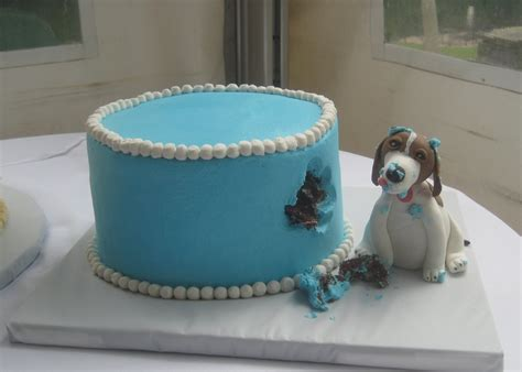 images  dog cake  pinterest cat birthday