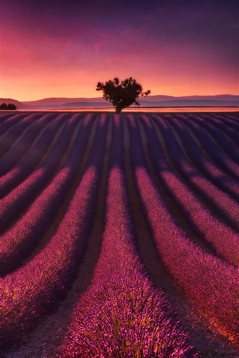 purple lava l purple stripes by julien delaval 500px