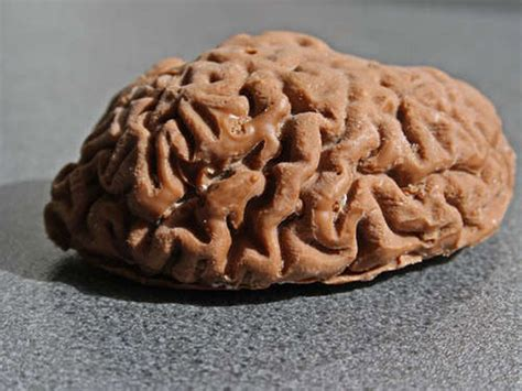d馭inition cuisine enjoy a chocolate version of your own brain foodiggity