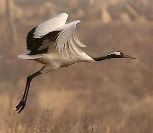 Traveling Mercies With Felicity and Kyrie » sandhill cranes