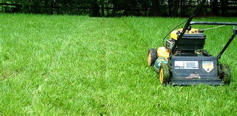 What Is The Proper Mowing Height For Grass In Your Yard