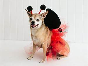 DIY Pet Halloween Costume Ideas | HGTV's Decorating ...