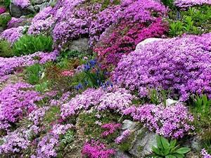Blumen Für Steingarten : steingartenpflanzen pflanzen in nanopics ~ Markanthonyermac.com Haus und Dekorationen