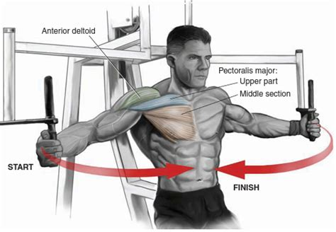 Pec Deck Fly Muscles Worked by Chest Bo Dy