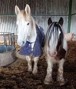 Two Horses Die After Lockdown Walkers Picnic In Their