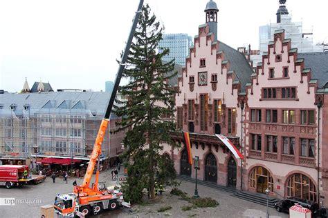 weihnachtsbaum in frankfurt auf dem r 246 mer angekommen