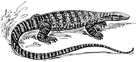 Monitor Lizard Free Vector / 4vector