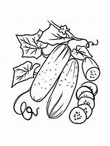 Cucumber Coloring Vegetable Fruit Eggplant Tomatoes Bitter Gaddynippercrayons Cucumbers Included Annual Short Crops Lived Pumpkin Such Melon Printable sketch template