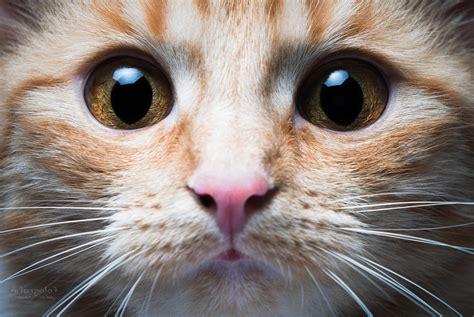 Wallpaper Cats Animals - cat animals closeup wallpapers hd desktop and mobile