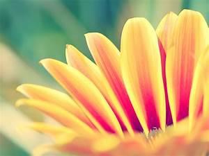 Orange Flower Closeup Desktop Wallpaper