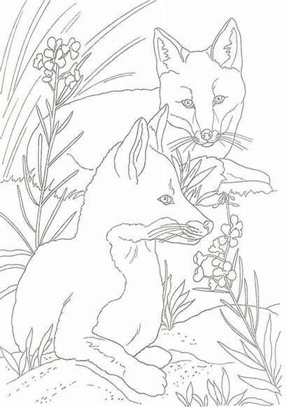Fox Coloring Easy Tulamama Pretty Note Personal