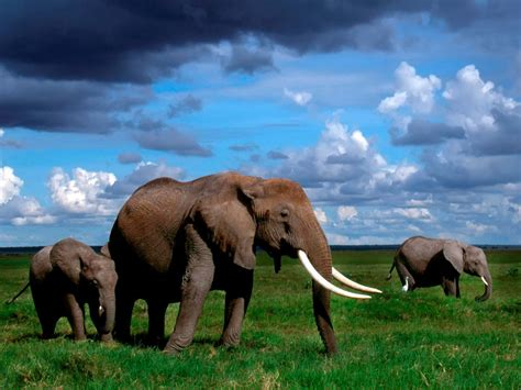 Elephant Wallpapers Hd Pictures