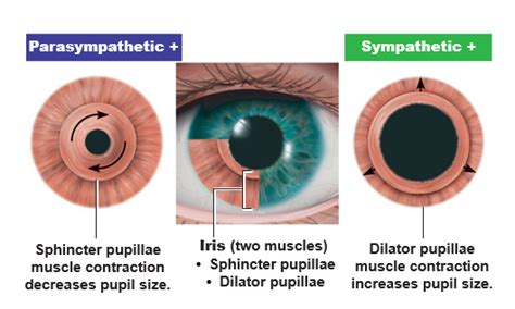 what is the colored part of the eye called the iris is the colored part of the eye that studyblue