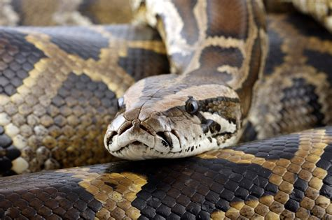 snake puts brakes  ambulance daily sun