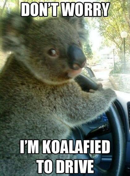 Funny Meme Jokes - top 30 funny animal memes and quotes quotes and humor