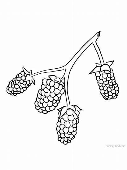 Trailing Growing Vines Usually Marionberry Gaddynippercrayons Cans