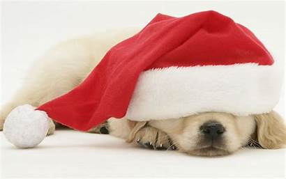 Christmas Dog Merry Desktop Puppies Dogs Animals
