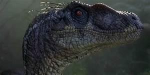 The Velociraptors in the 'Jurassic Park' movies are ...  Velociraptor