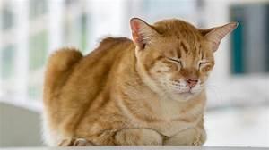 Verkleidung Für Katzen : blasenentz ndung bei katzen behandeln tipps ~ Frokenaadalensverden.com Haus und Dekorationen