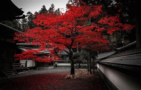 fondos de pantalla japon arboles ciudades descargar imagenes