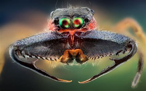 Incredible High Quality Macro Photography Of Insects [20